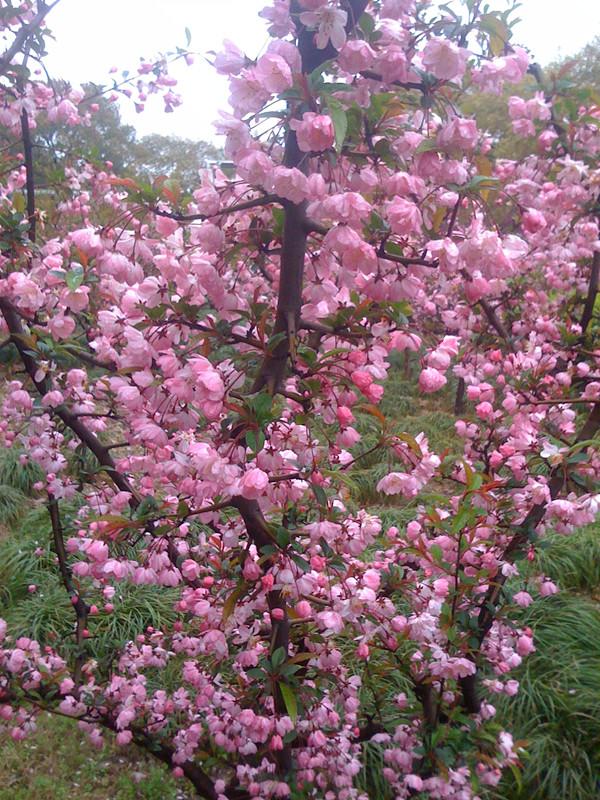 寻找春天的足迹